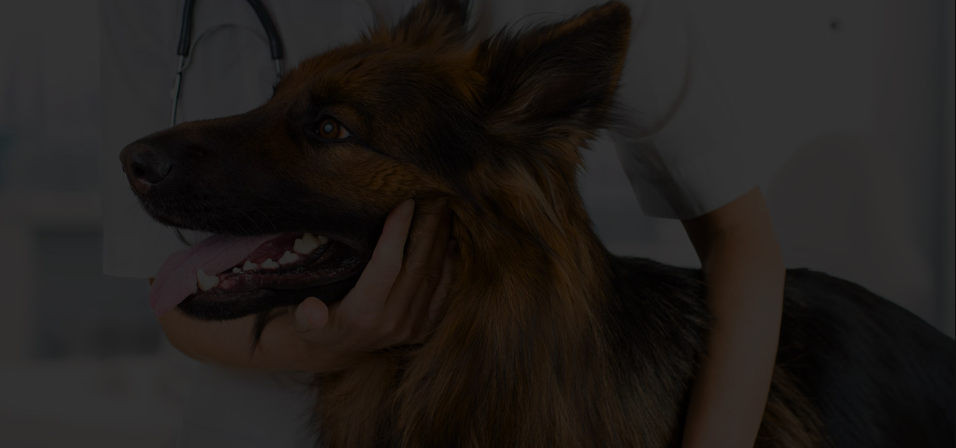 assurance-chien-online