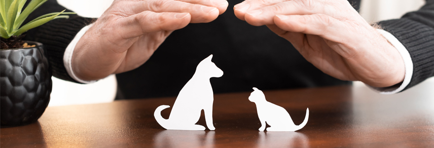 assurance animaux